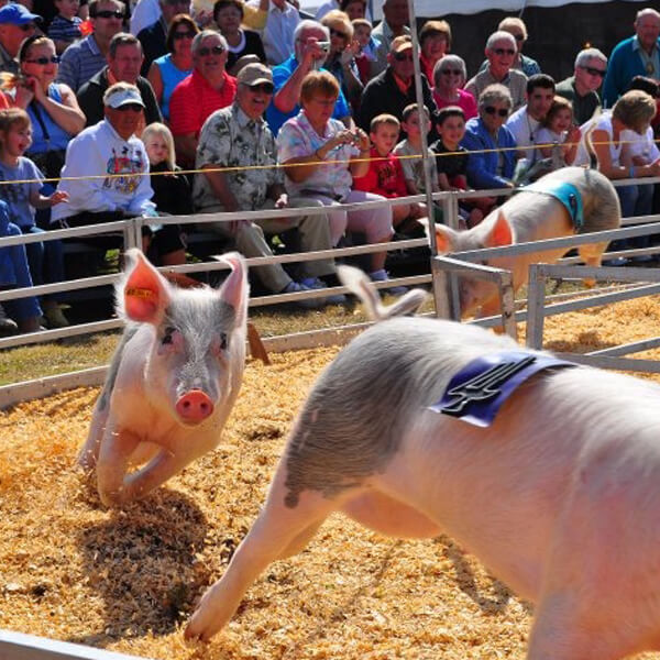 Broome County Fair Special Kids Day